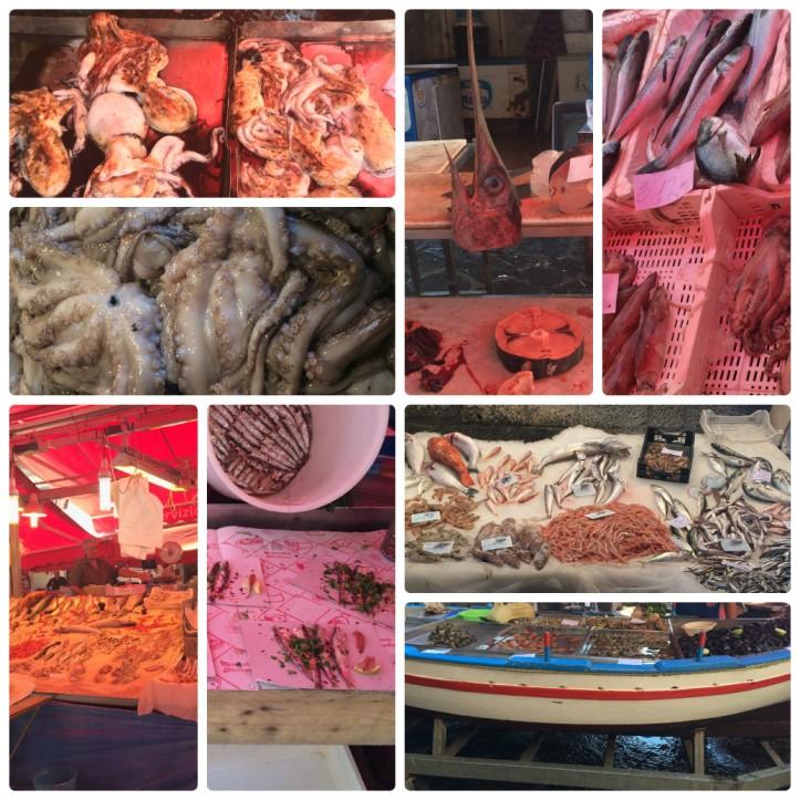 collage_photocat fish